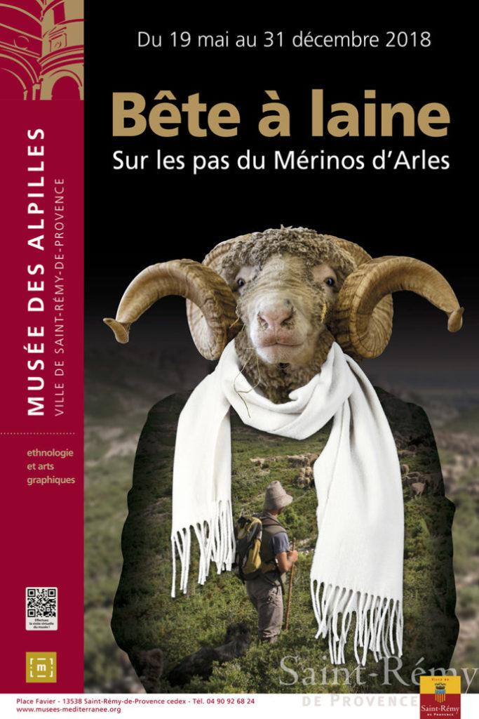 Sur les pas du Mérinos d'Arles