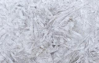 Calamité agricole gel