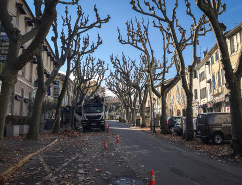 Fin de l'élagage des platanes en centre ville les 26 et 27 novembre