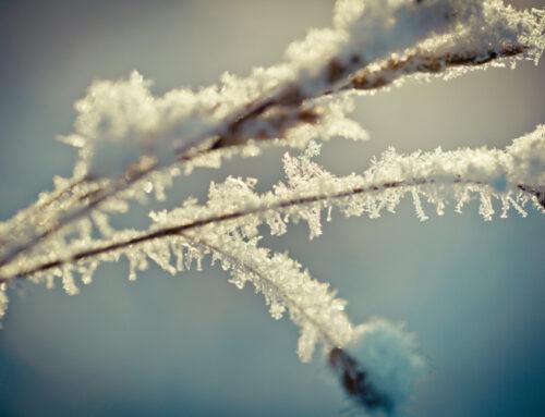 Indemnisation des agriculteurs suite au gel des 25 et 26 mars 2020